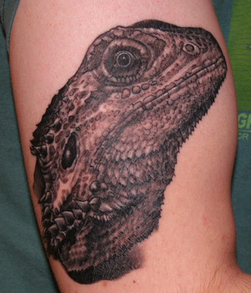 bearded dragon tattoo tattoo picture. Black Bedroom Furniture Sets. Home Design Ideas