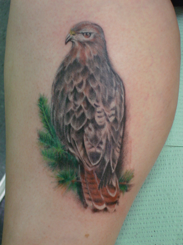 Tattoo on man red tailed hawk tattoo red tailed hawk tattoo see what