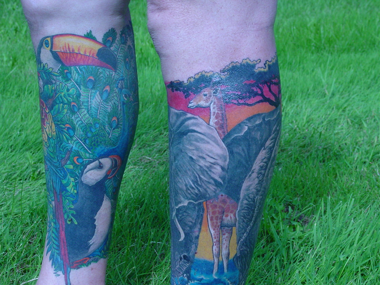giraffe and toucan side of both legs tattoo picture. Black Bedroom Furniture Sets. Home Design Ideas