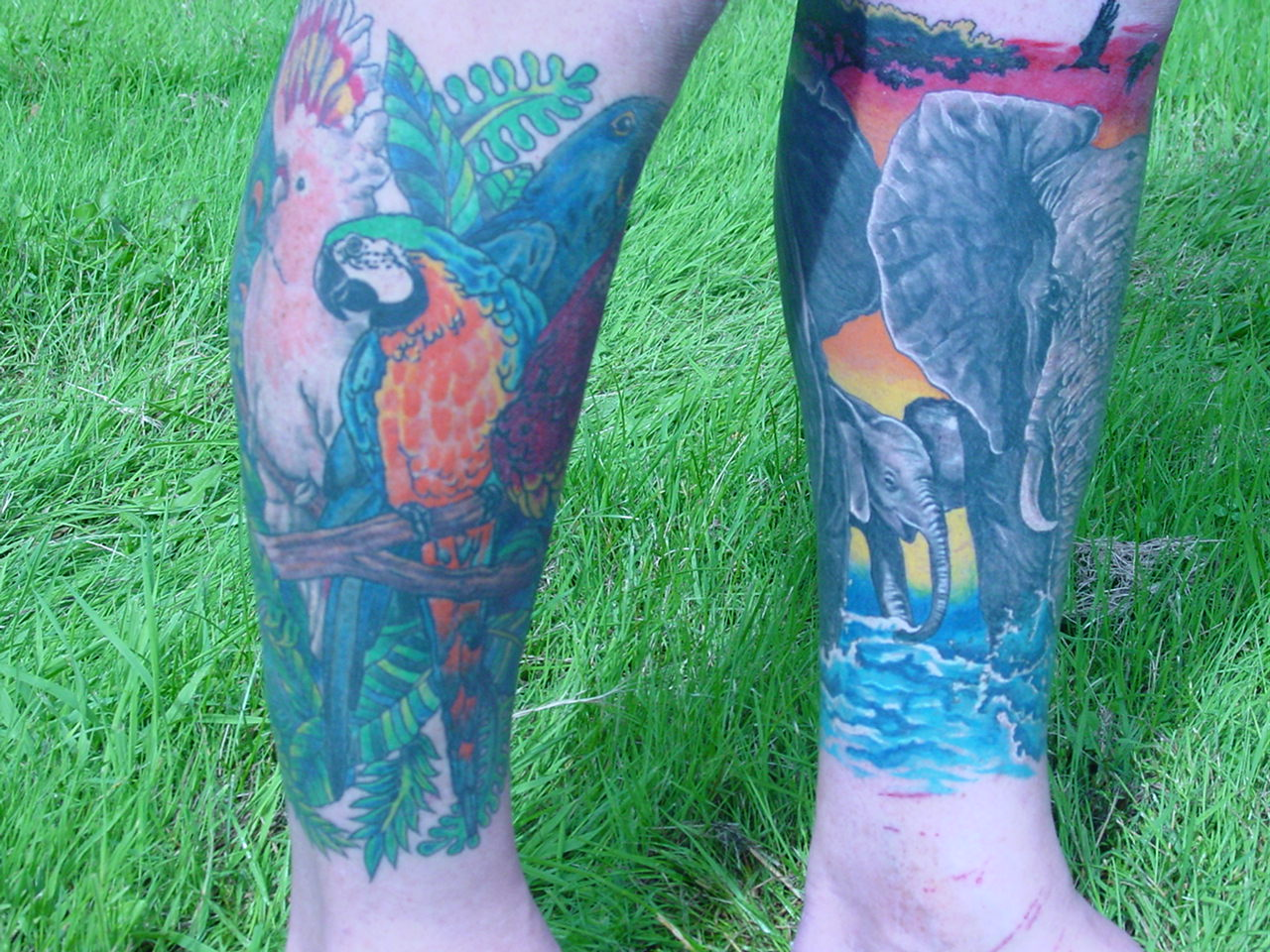 SIDES OF BOTH LEGS DONE BABY ELEPHANT SIDE