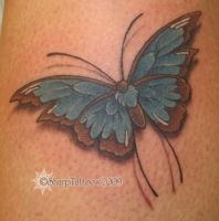 Blue & Brown Butterfly