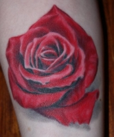 My red rose by Phill Young