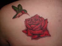 rose and humming bird tribute