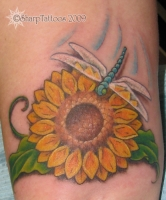 Sunflower Dragonfly